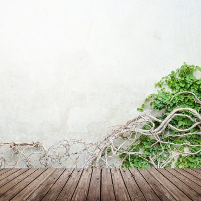 Plant Walls: Bringing the Outside, In!
