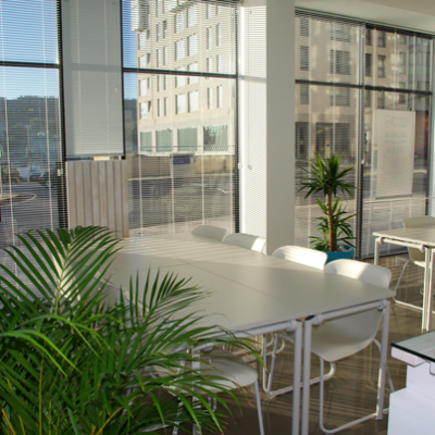 Going Green: The Importance of Plants in Offices