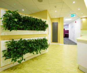 Open plan office kitchen with live plant wall